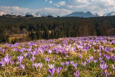 Wiosna z widokiem na Tatry